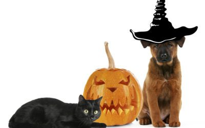Halloween Pet Safety Tips for Your Dog or Cat